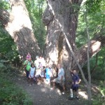 Group at the old cottonwood, Lac qui Parle State Park.
