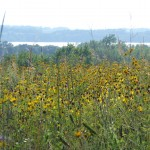 Field of wildflowers with the lake in the background.