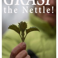 Grasp the Nettle Image-Web