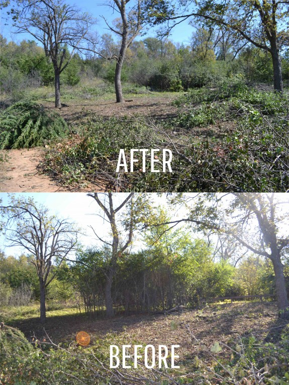 Before & After_Buckthorn Removal at Lac qui Parle