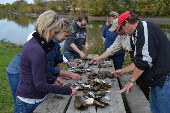 MRVED teachers share their finds and work together to identify the various species of both live mussels and their remnant shells.