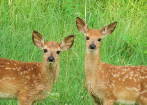Photo by Terri Dinesen, DNR Parks Manager.