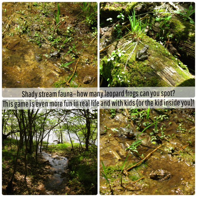 Frogs in stream collage
