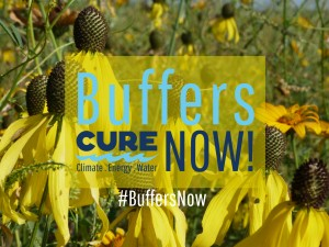 Buffers Now Graphic_native flowers_yellow 1