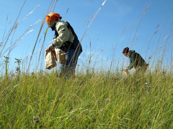 Minnesota Master Naturalists gathering prairie seeds