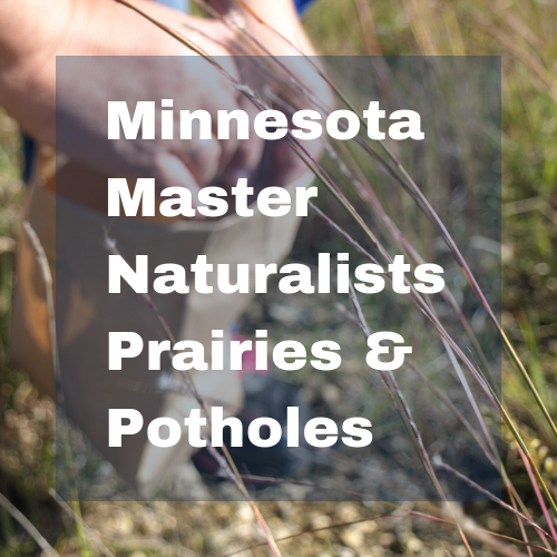 Minnesota Master Naturalists Prairies & Potholes button