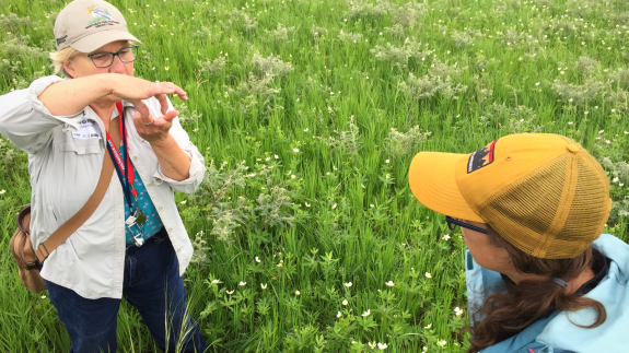 Margaret Kuchenreuther leds a prairie plant survey. Rhyan Schicker looks on. Both are CURE Board Members!