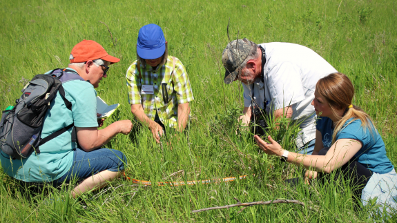 A small group learning more about the prairie at the 2019 Minnesota Master Naturalists Prairies & Potholes training.
