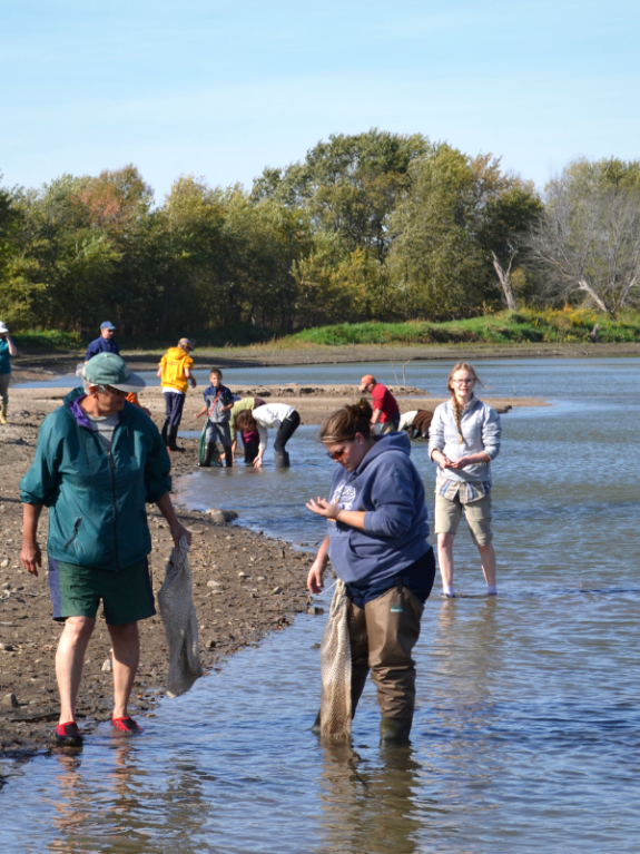 People standing in the Minnesota River and on the riverbank looking for freshwater mussels